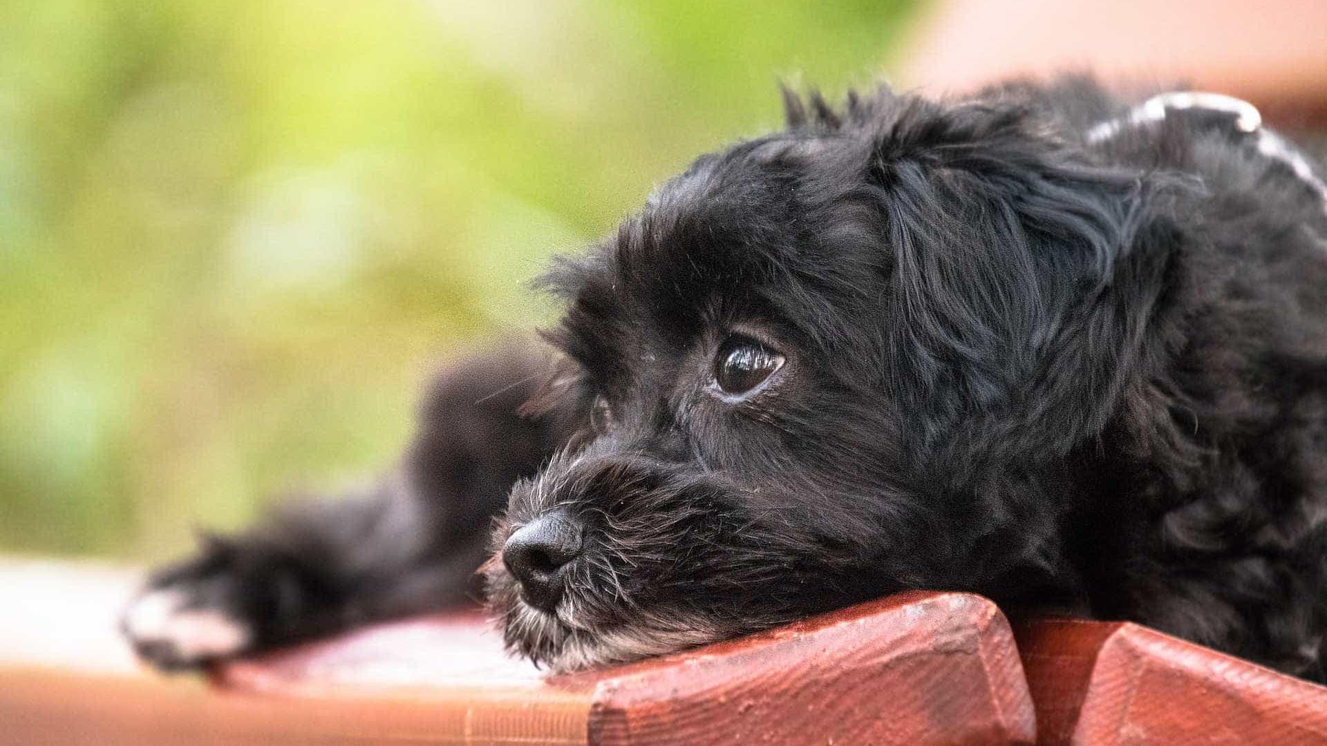 Ex-prefeito acusado de ordenar matança de cães é condenado