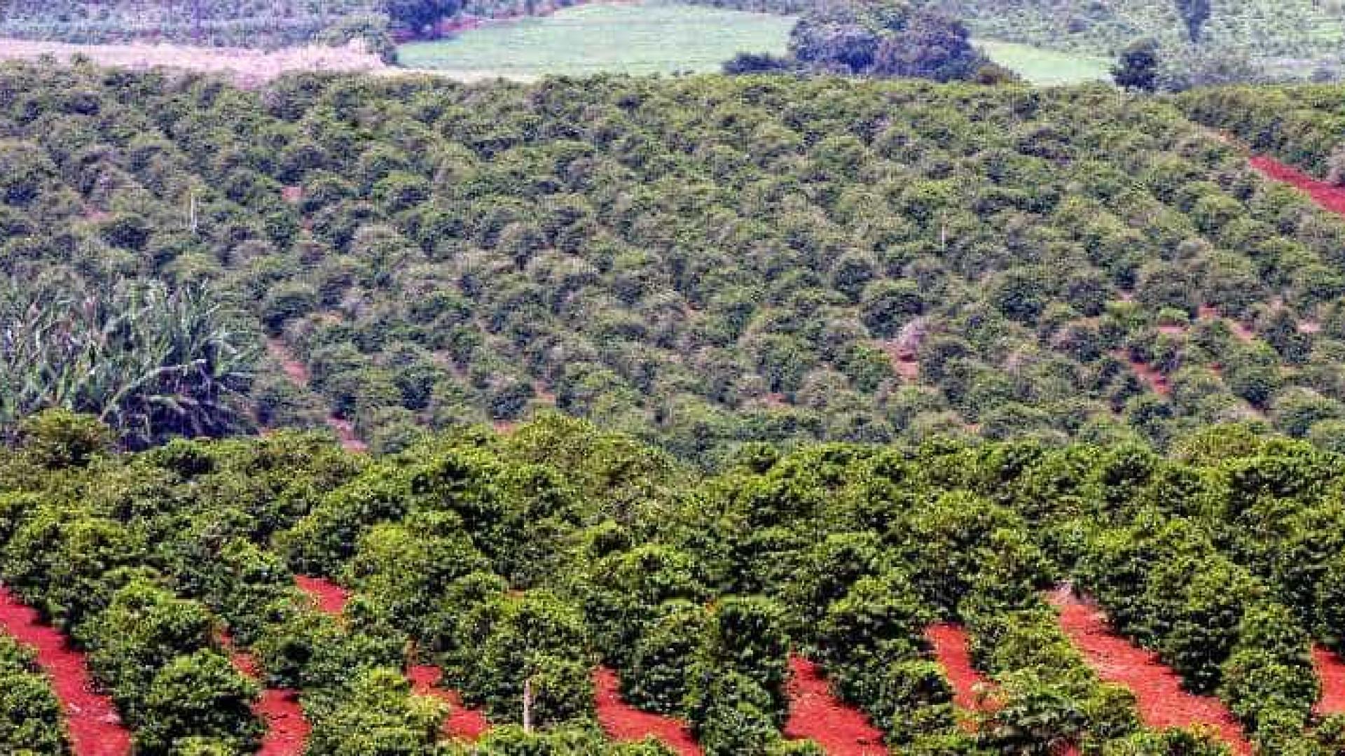 Produção de café do País deve chegar a 58 milhões de sacas em 2018