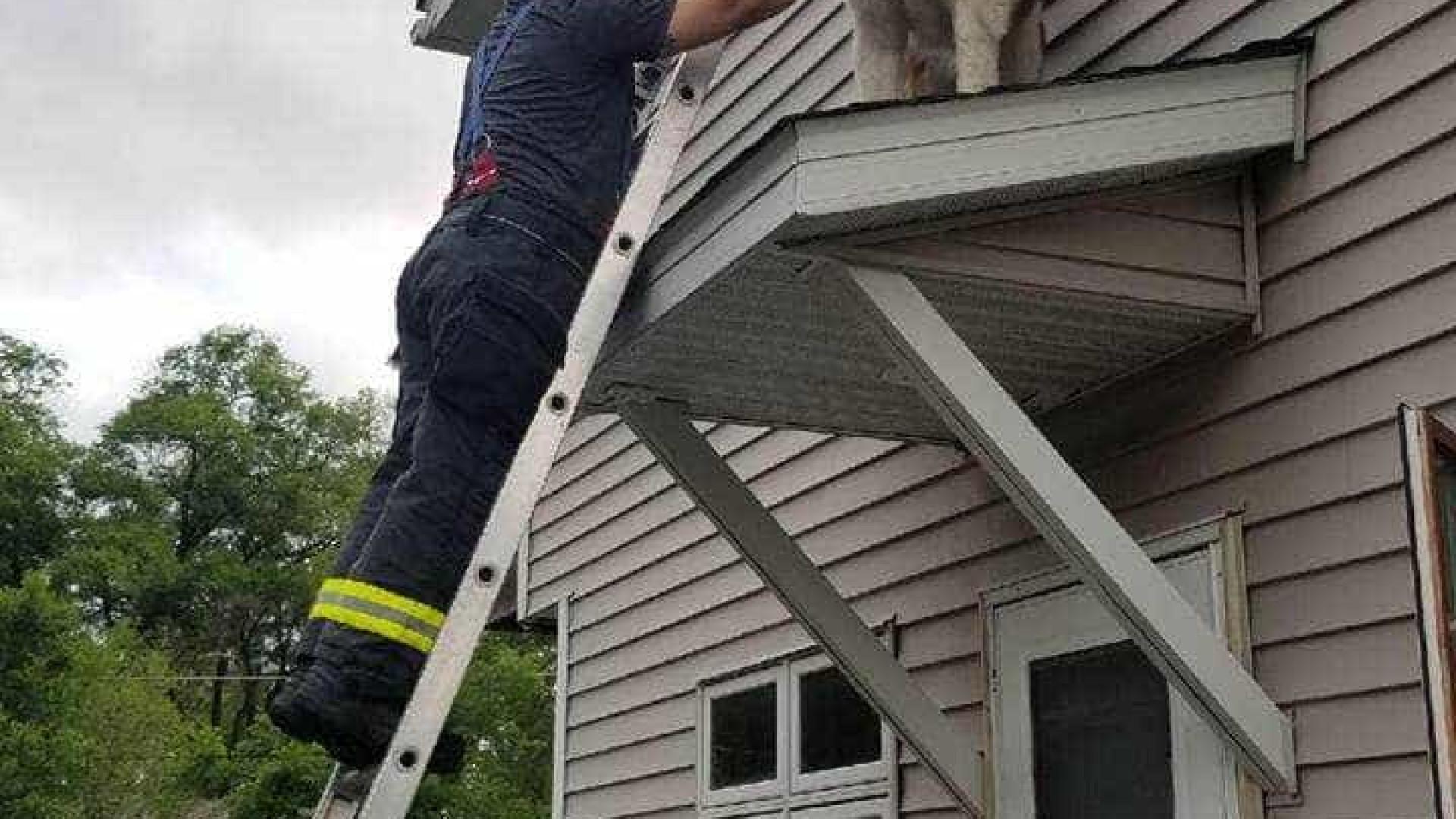 Bombeiros salvam cão São Bernardo de 80 quilos preso no telhado