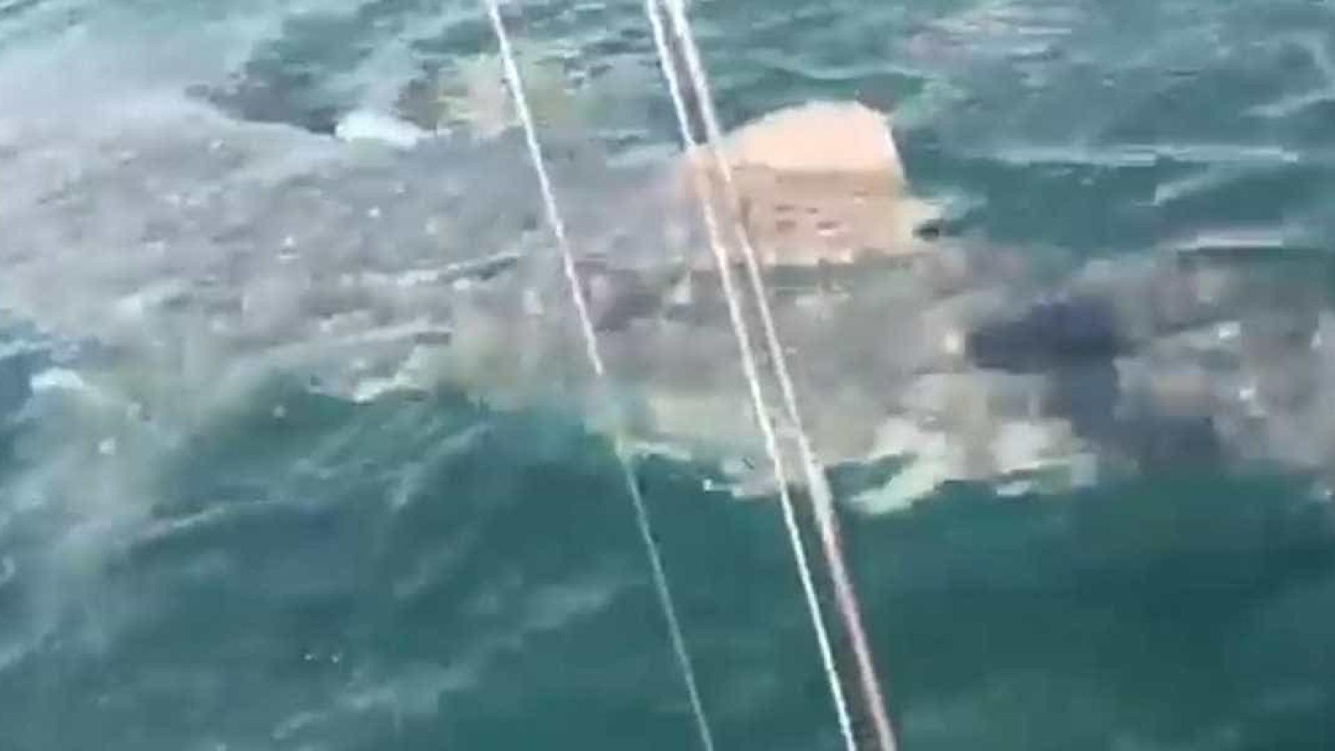 Pescador tem encontro surpreendente com tubarão-baleia