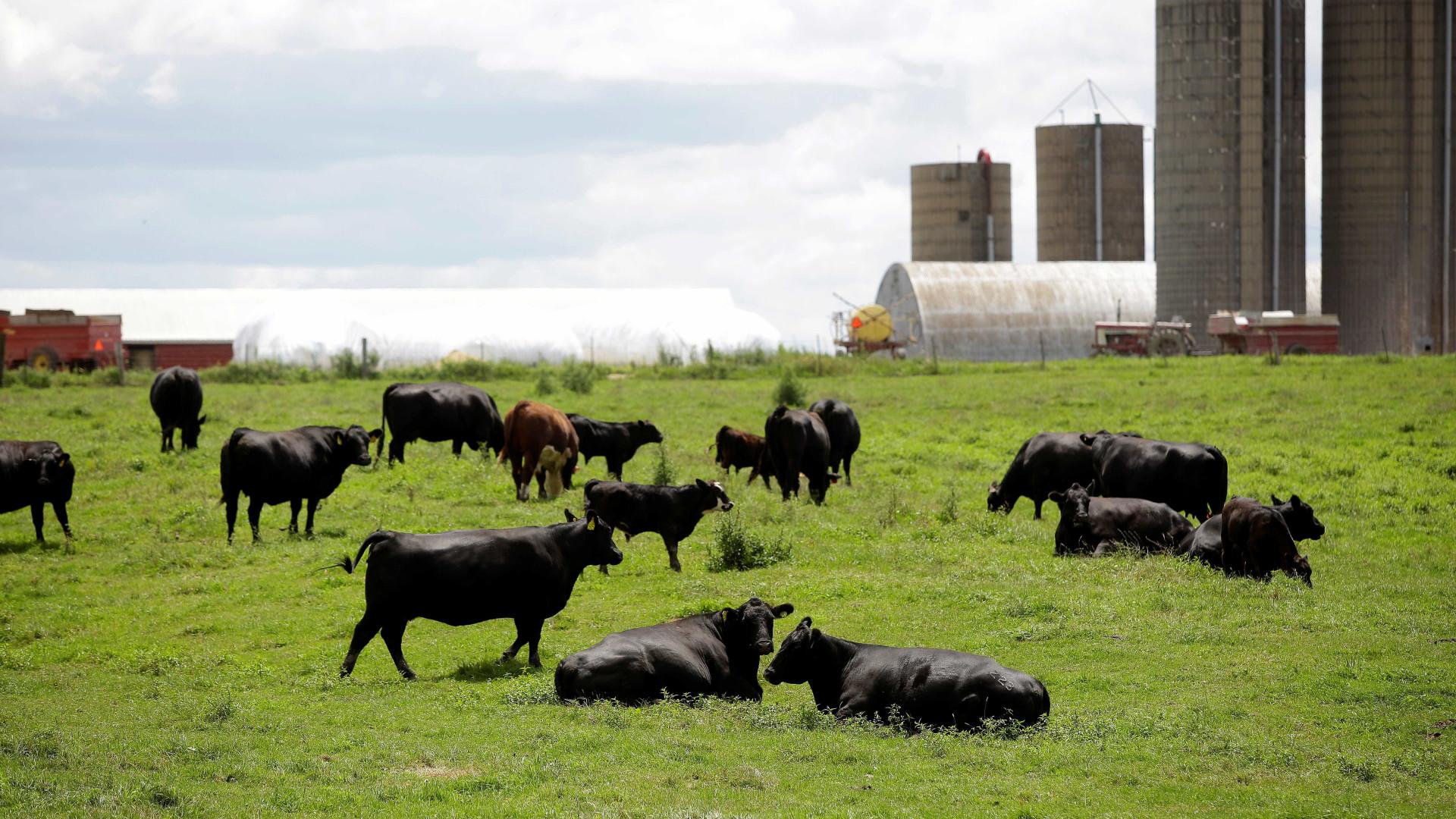Estado agrícola enfrenta dilema da guerra comercial