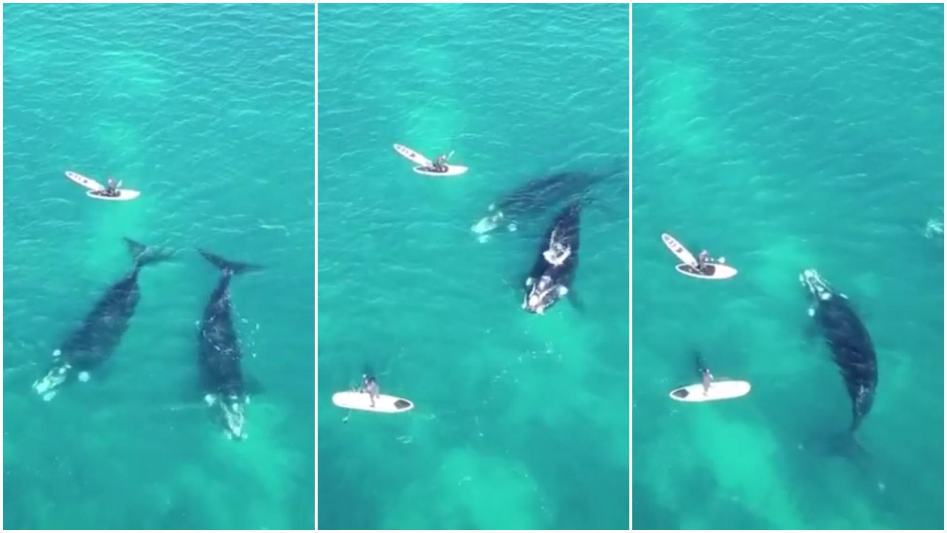 Pai e filho têm encontro emocionante com baleias na Austrália