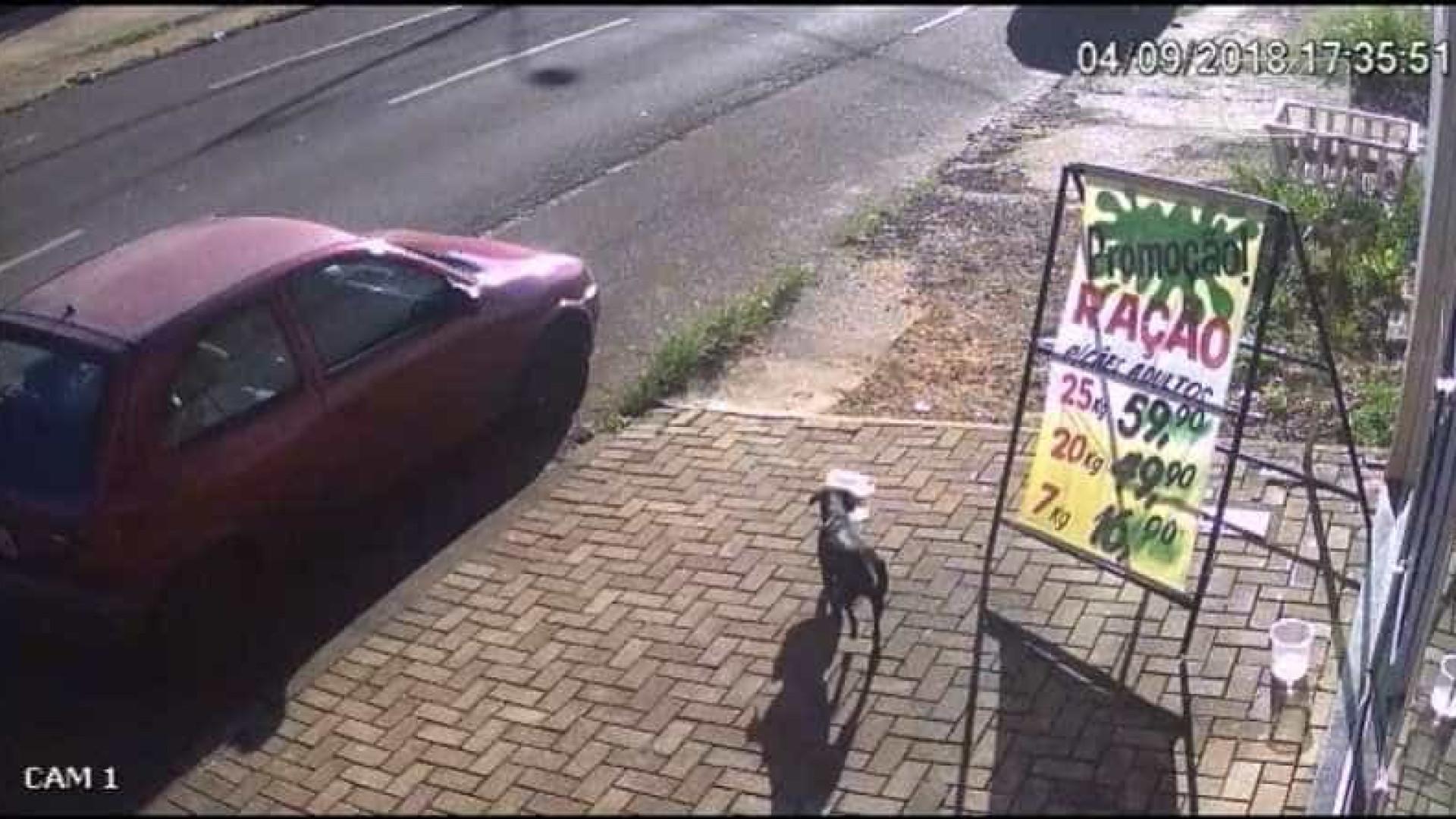 Cachorro furta pote com ração em frente a pet shop e é flagrado