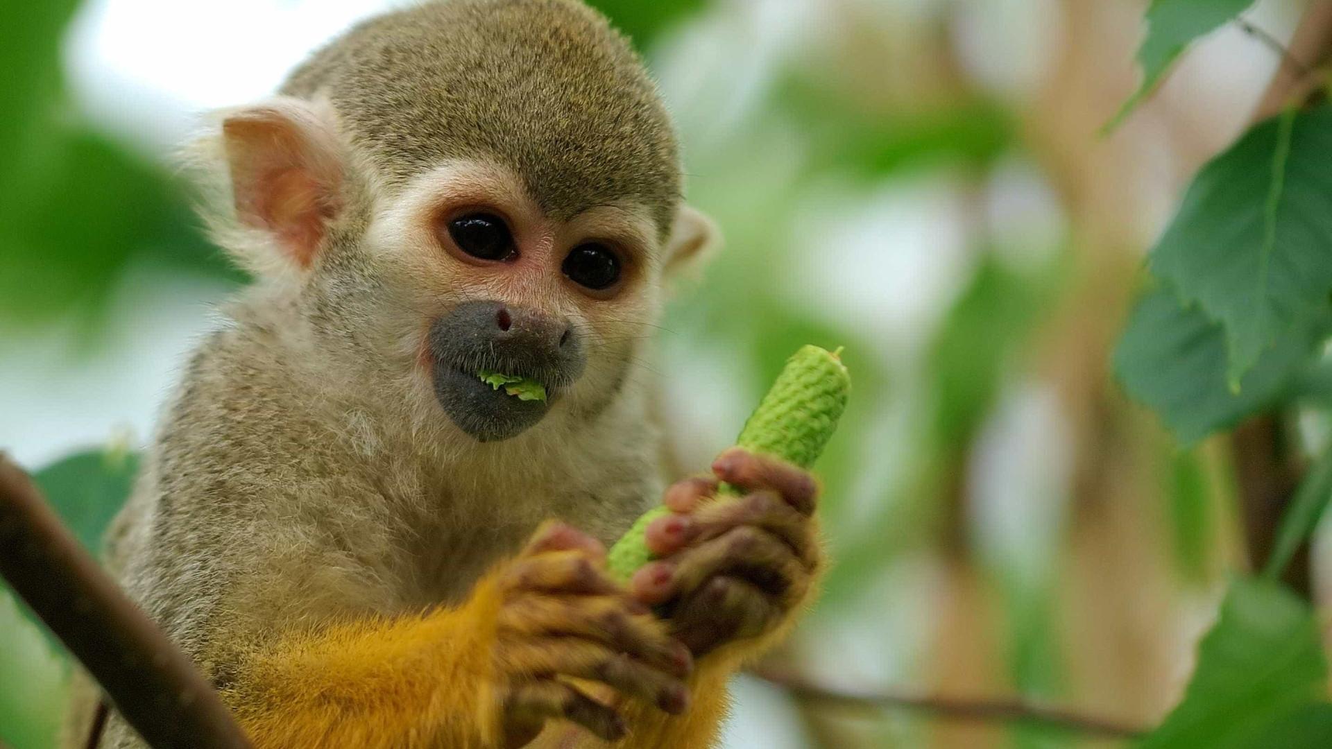 Homem tenta roubar macaco de zoológico para dar a namorada