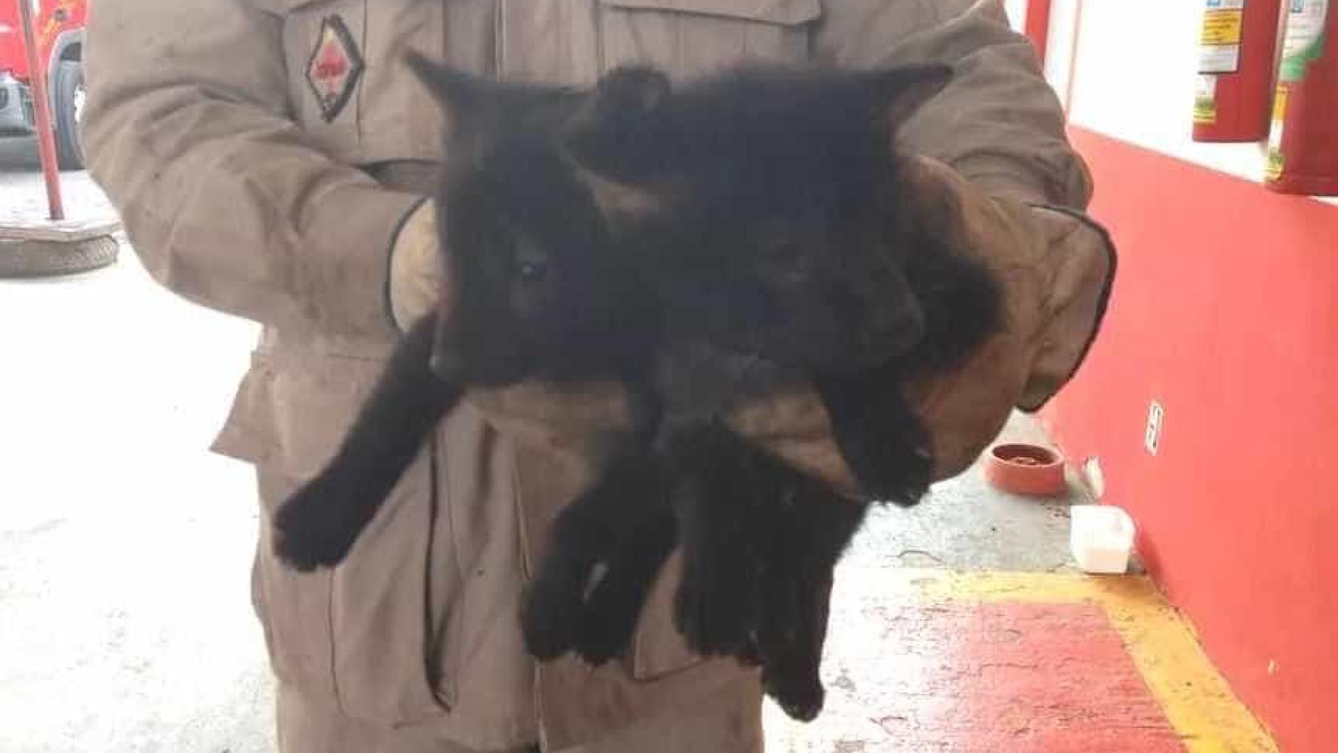 Filhotes de lobo-guará são resgatados durante incêndio florestal em MT