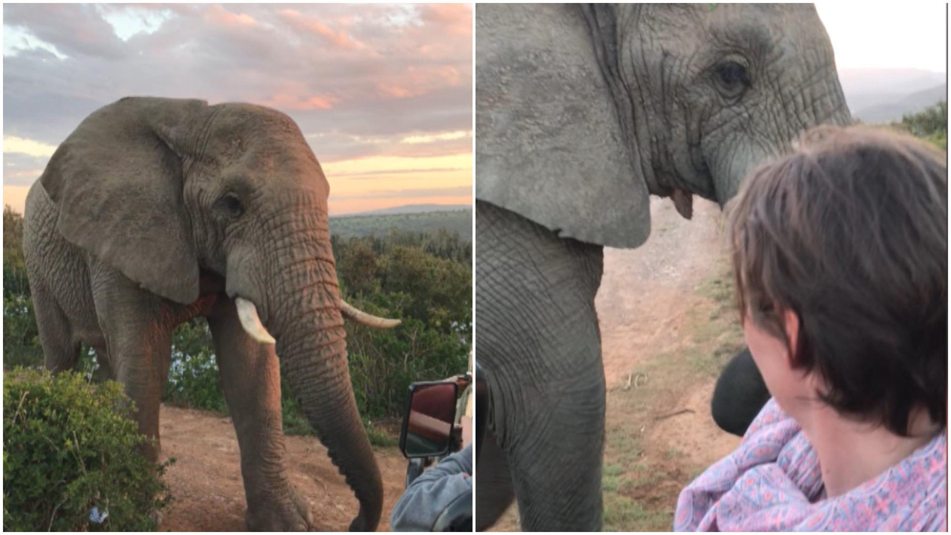 Turista fica frente a frente com elefante selvagem