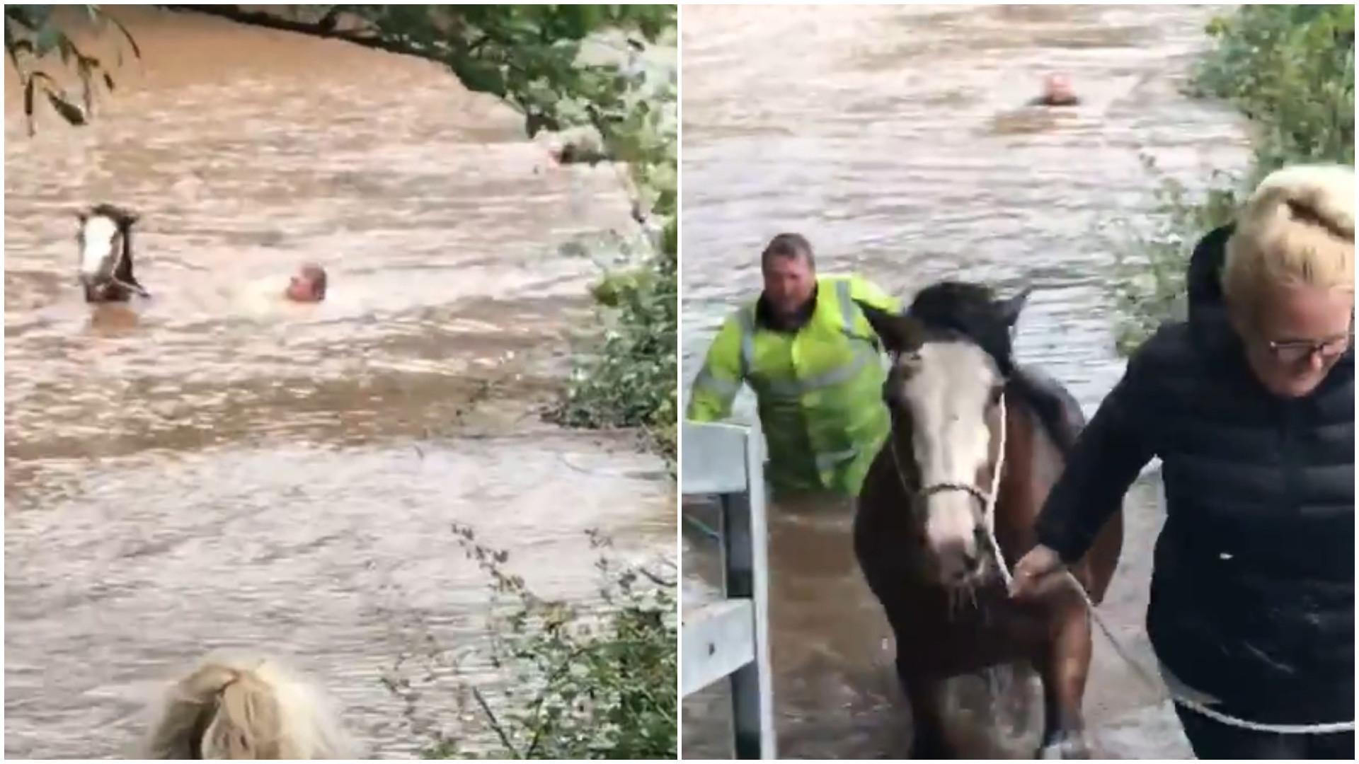 Cavalo é salvo de forma emocionante no País de Gales