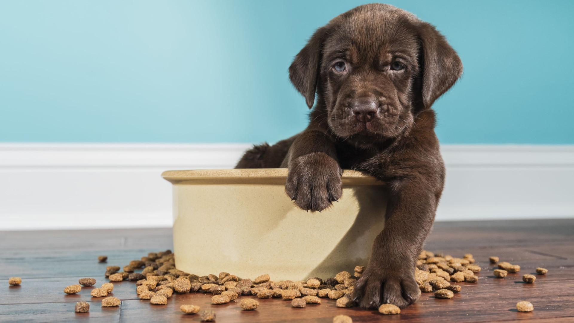 Seu cão de estimação é especial? Então fique atento à alimentação dele