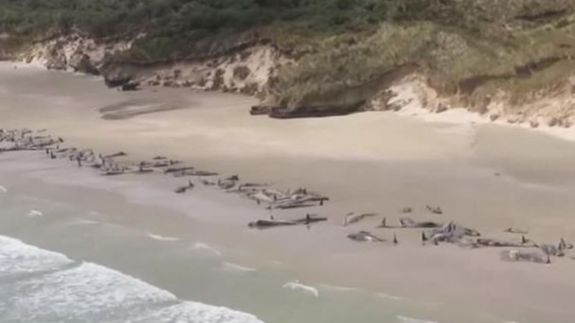 Mais de 140 baleias morrem em praia da Nova Zelândia