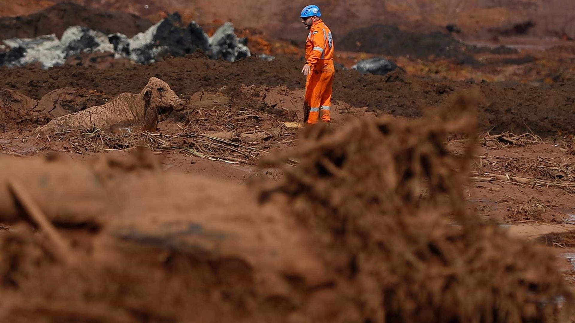 Com tiros, agentes executam animais na lama de Brumadinho