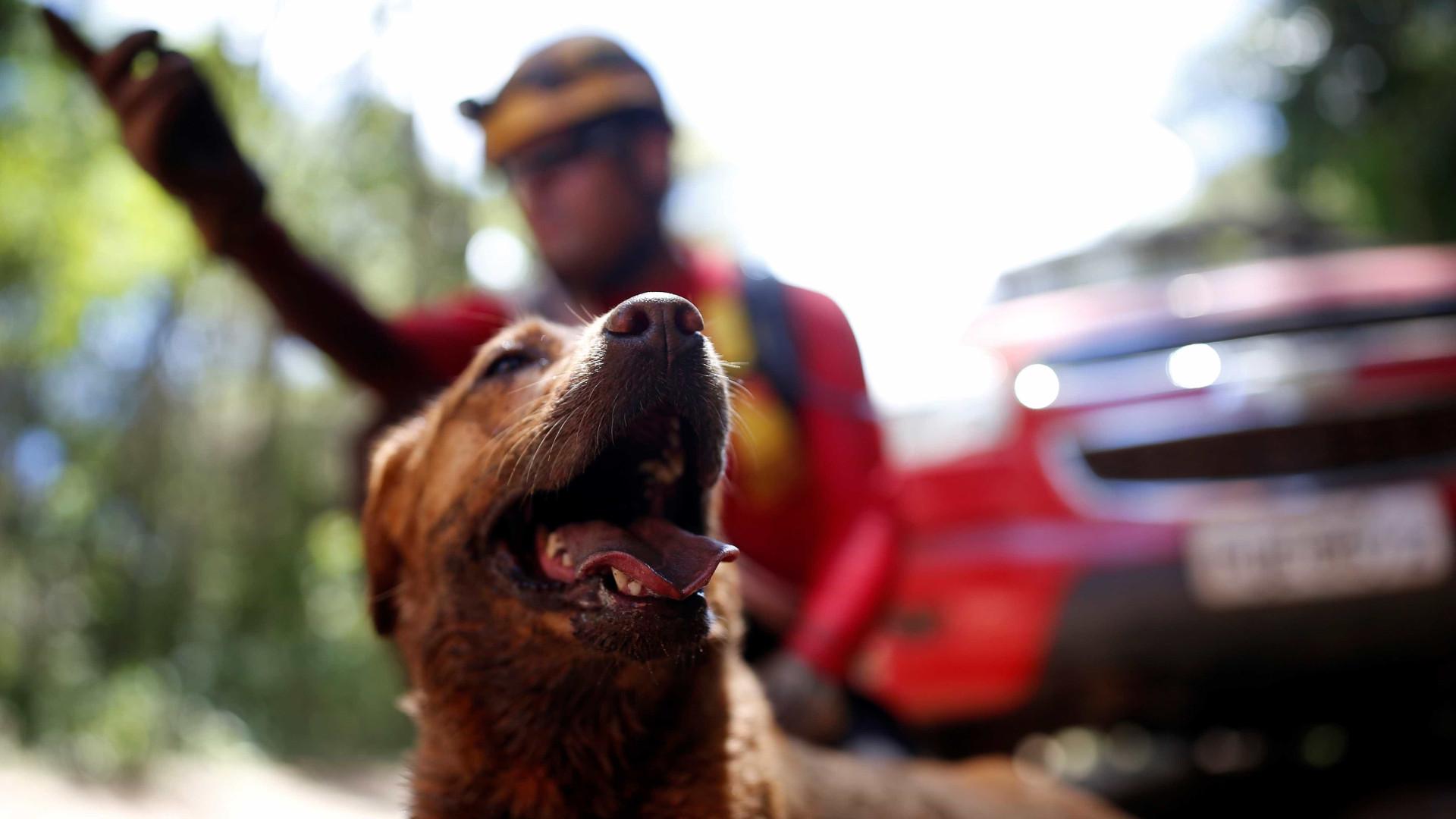 Voluntário com cão resgatado interrompe coletiva da Vale: 'Criminosa'
