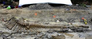 Descoberta de nova espécie muda história dos dinossauros na Austrália