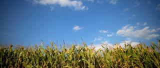 Em crise, setor do agronegócio perde receita e empregos