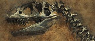 Pesquisadores descobrem 150 pegadas de dinossauros na Austrália