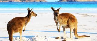 Austrália: 5 formas de conhecer o país