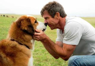 Première mundial de 'Quatro vidas de um cachorro' é cancelada