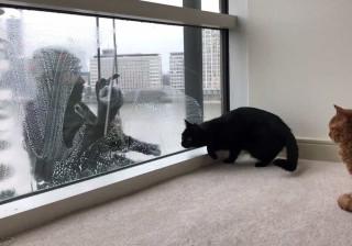 Gato maluco por limpa-vidros viraliza na web; veja!