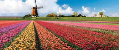 Veja 30 destinos para visitar na primavera