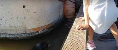 Leão-marinho arrasta menina para água  no Canadá; assista