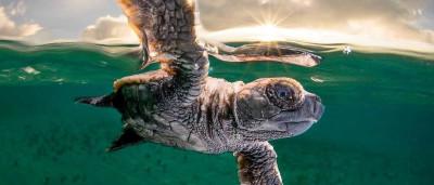 Vida aquática: animais fotografados debaixo d´água