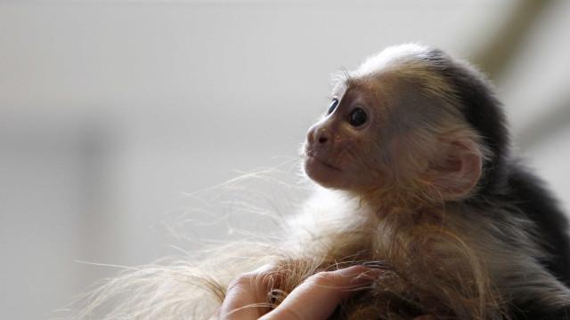 Febre amarela já matou 10 pessoas e 501 macacos em SP em 16 meses