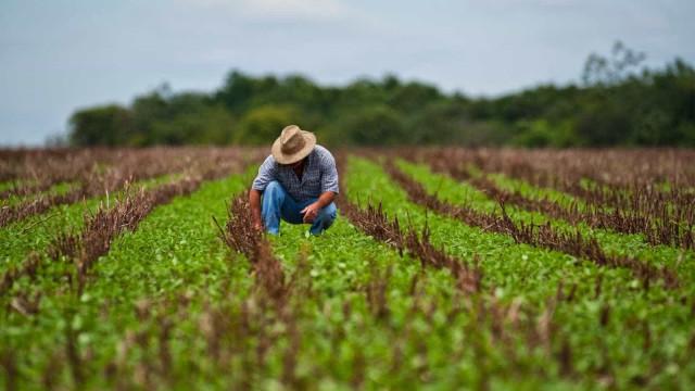 Não precisa desmatar para elevar safra agrícola, diz Haddad