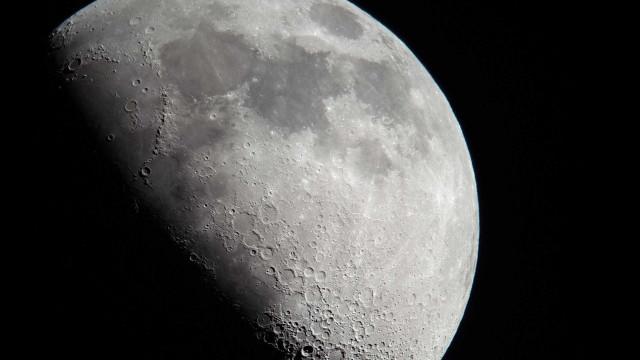 Morre a primeira planta a nascer na Lua