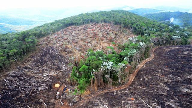 Governo critica pressão internacional para manter 'todas as florestas'