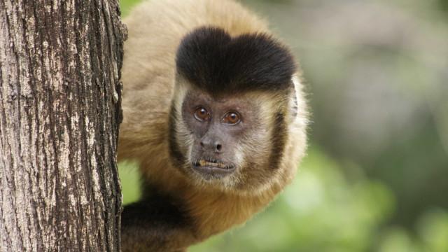 Secretaria confirma morte de 3 macacos por febre amarela em SP