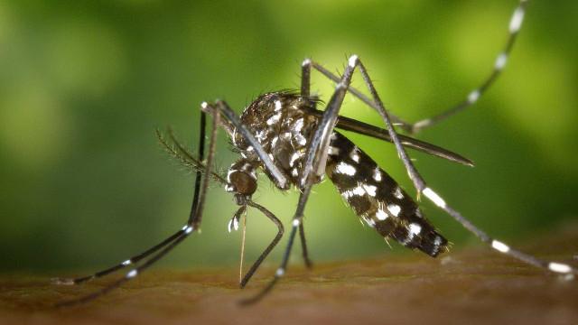 Notificações de denguem caem 84% no Brasil