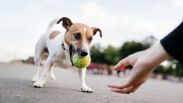 Donos de cachorros vivem mais, diz estudo