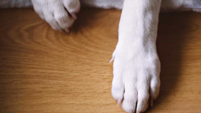 Cão é acusado de crime de ódio por fazer cocô à porta de desconhecido