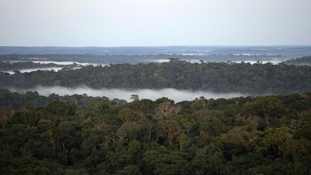 Brasil atinge meta de redução de emissões de carbono na área florestal