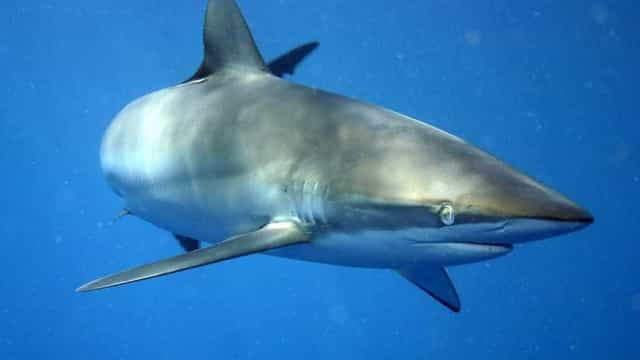 Vídeo flagra tubarão próximo a banhistas em praia da Região dos Lagos