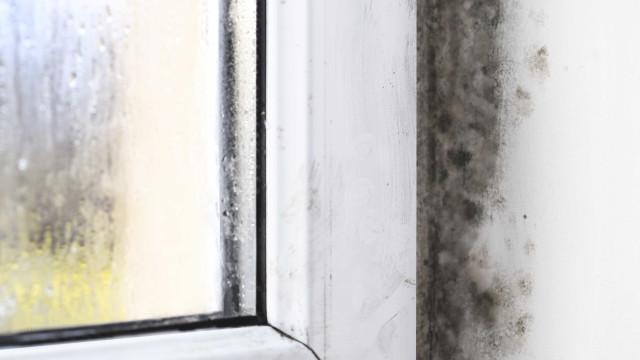 Aprenda a fazer antimofo caseiro e elimine esta praga de casa