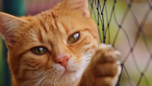 Gatos herdam US$ 300 mil após morte de dona nos EUA