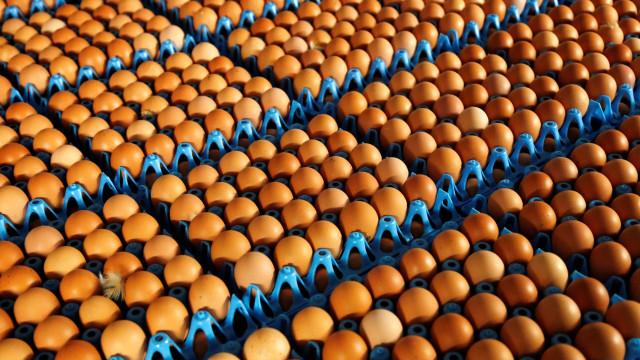Ovos contaminados já foram identificados em 17 países