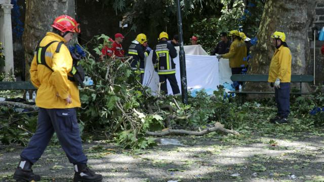 Queda de árvore em festa religiosa mata  13 e fere dezenas na Madeira