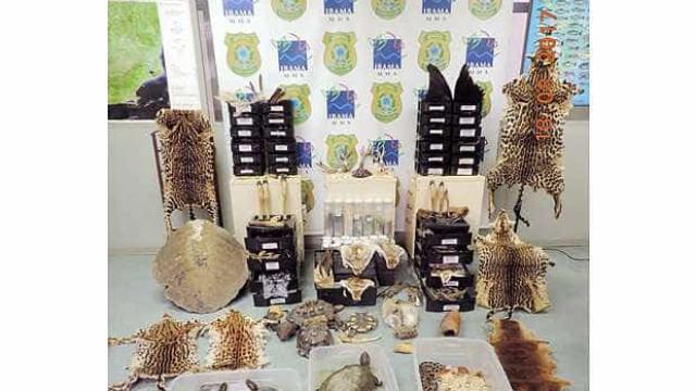 Ibama apreende no Rio animais e pedaços de bichos usados em rituais