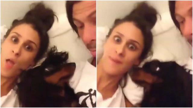 Donos trolam cão em vídeo hilário; confira