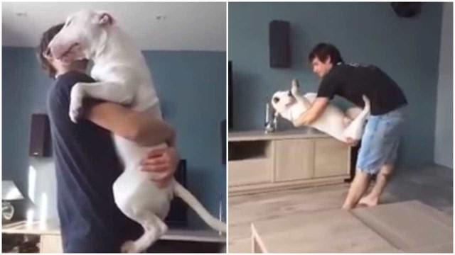 A dança romântica entre um cão e o seu dono