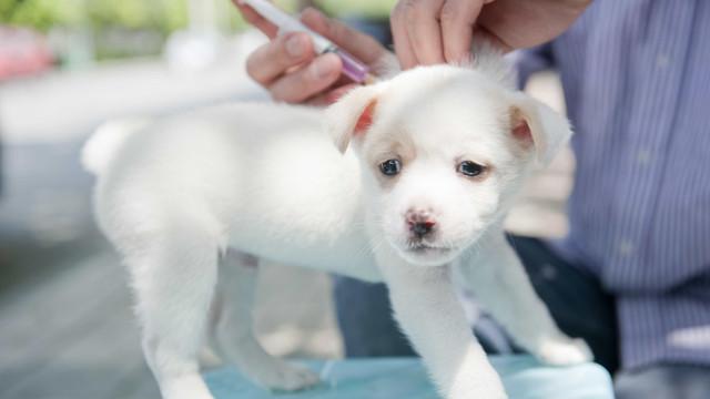 5 motivos para manter a vacinação dos pets em dia
