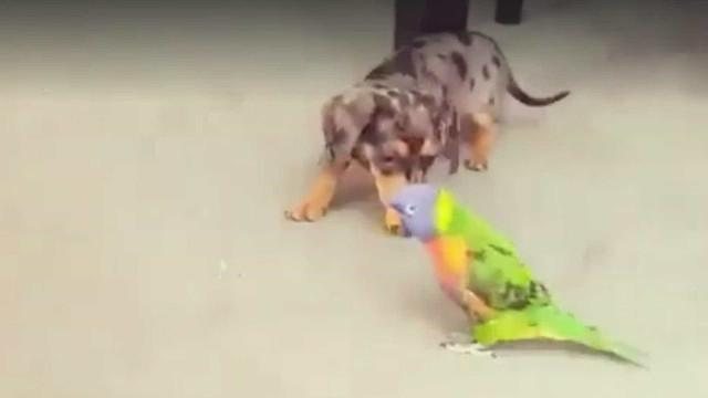 Veja como se dá a amizade inusitada entre um cão e um pássaro