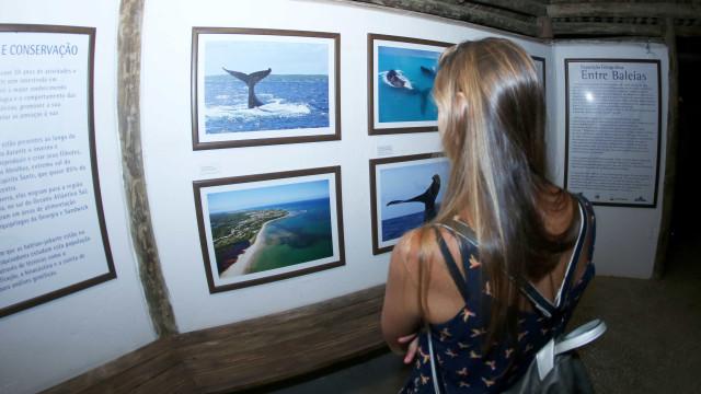 Exposição fotográfica conta a história da proteção às baleias