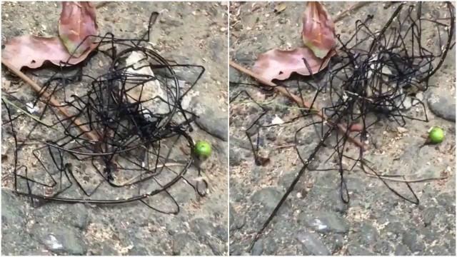 Criatura 'alienígena' choca banhistas em praia de Taiwan