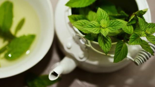 Saiba quais são os benefícios de 30 plantas medicinais poderosas