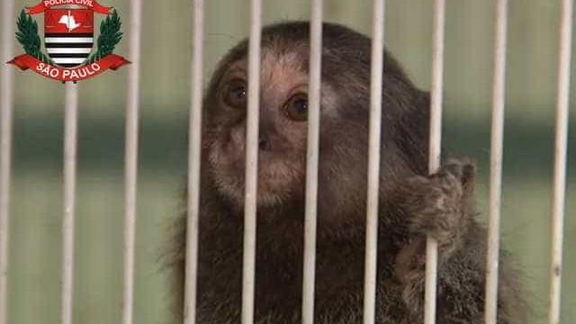 Homem suspeito de vender animais silvestres na web é preso
