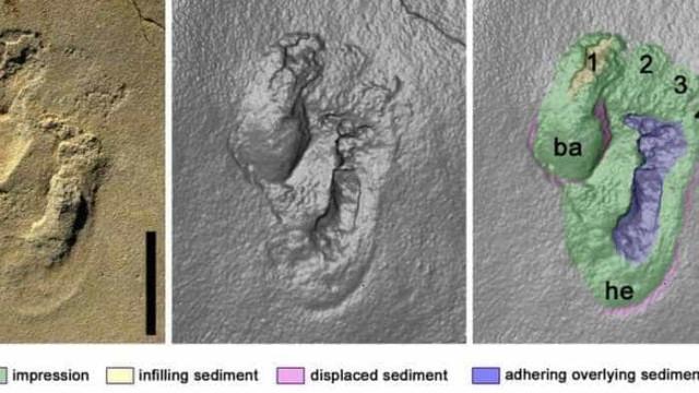 Pegada de 5,7 milhões de anos põe em xeque local da origem humana