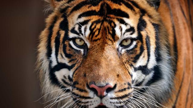 Risco Iminente: os animais mais ameaçados de extinção do mundo