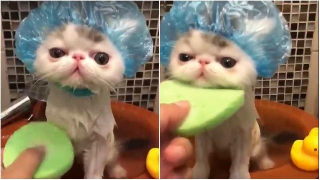 Este gatinho no banho é a coisa mais fofa que você vai ver hoje